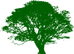 green-tree-md[1].png
