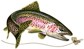 rainbow trout.png