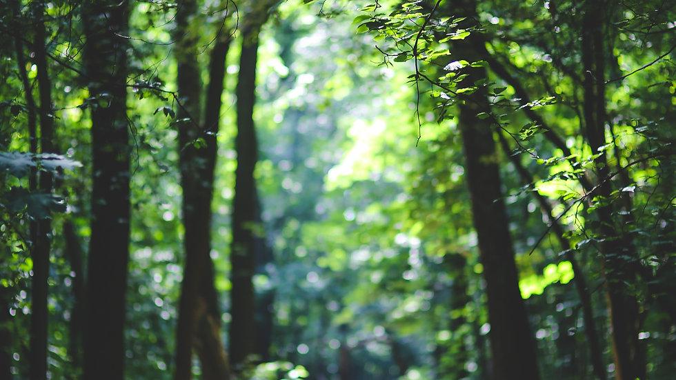 forest-3840x2160-5k-4k-wallpaper-8k-tree
