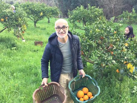 Orange Picking in February - rural Portugal living