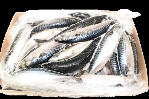 냉동 고등어 | Mackerel | 20kg