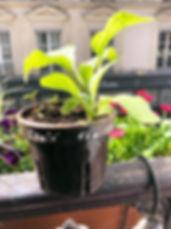 Pot2.jpg