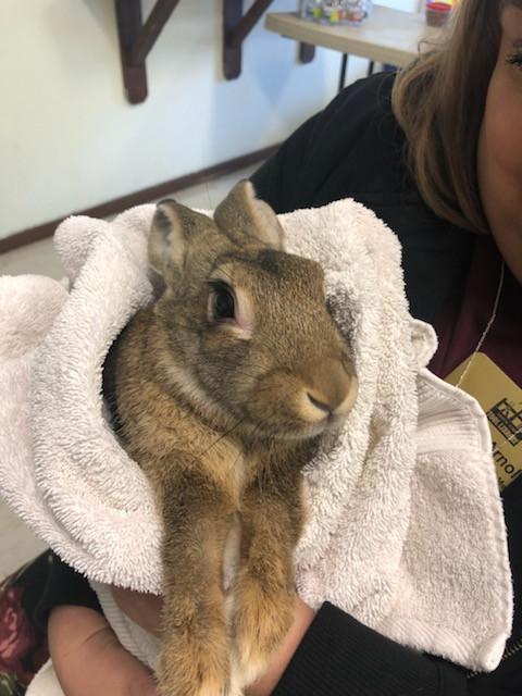 photo of Tiny the Bunny