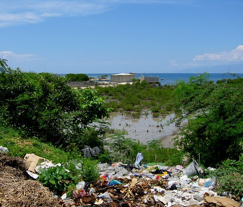 A view with trees and the ocean, but the bottom third shows a lot of trash