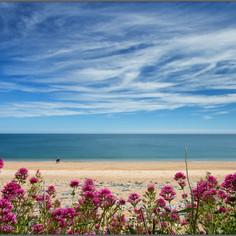 South Hams Beach