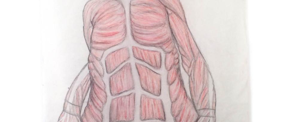 "Anatomy Study of ""Branded"" by Jenny Saville; muscle layer"