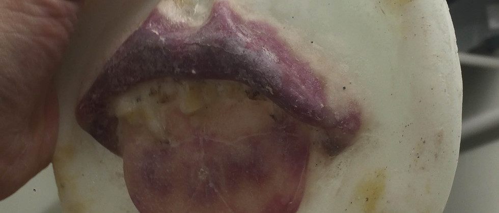 Mouth (detail)
