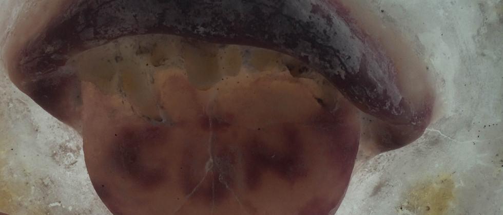 Mouth Tile (detail)