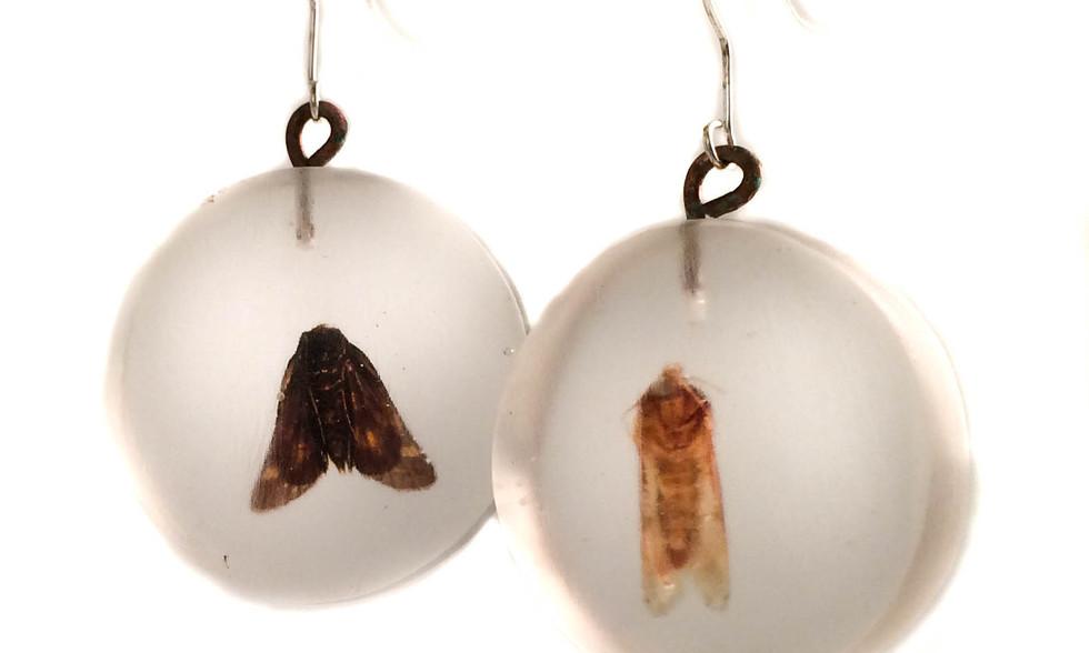 Moth Circles