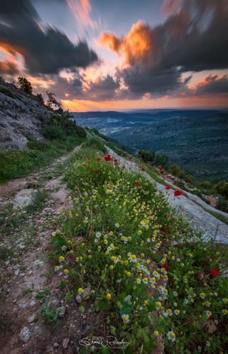Sorek Reserve, Israel