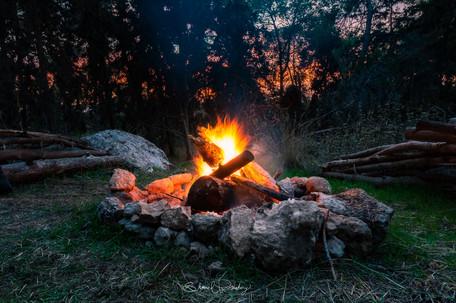 Beit Shmesh Forest