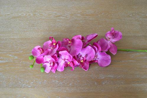 Fausses orchidées