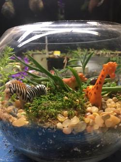 Safari Succulent Terrarium