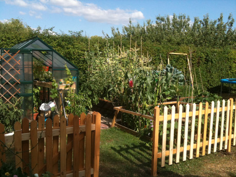 Vegetable patch creation
