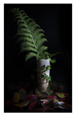 Still life fern better