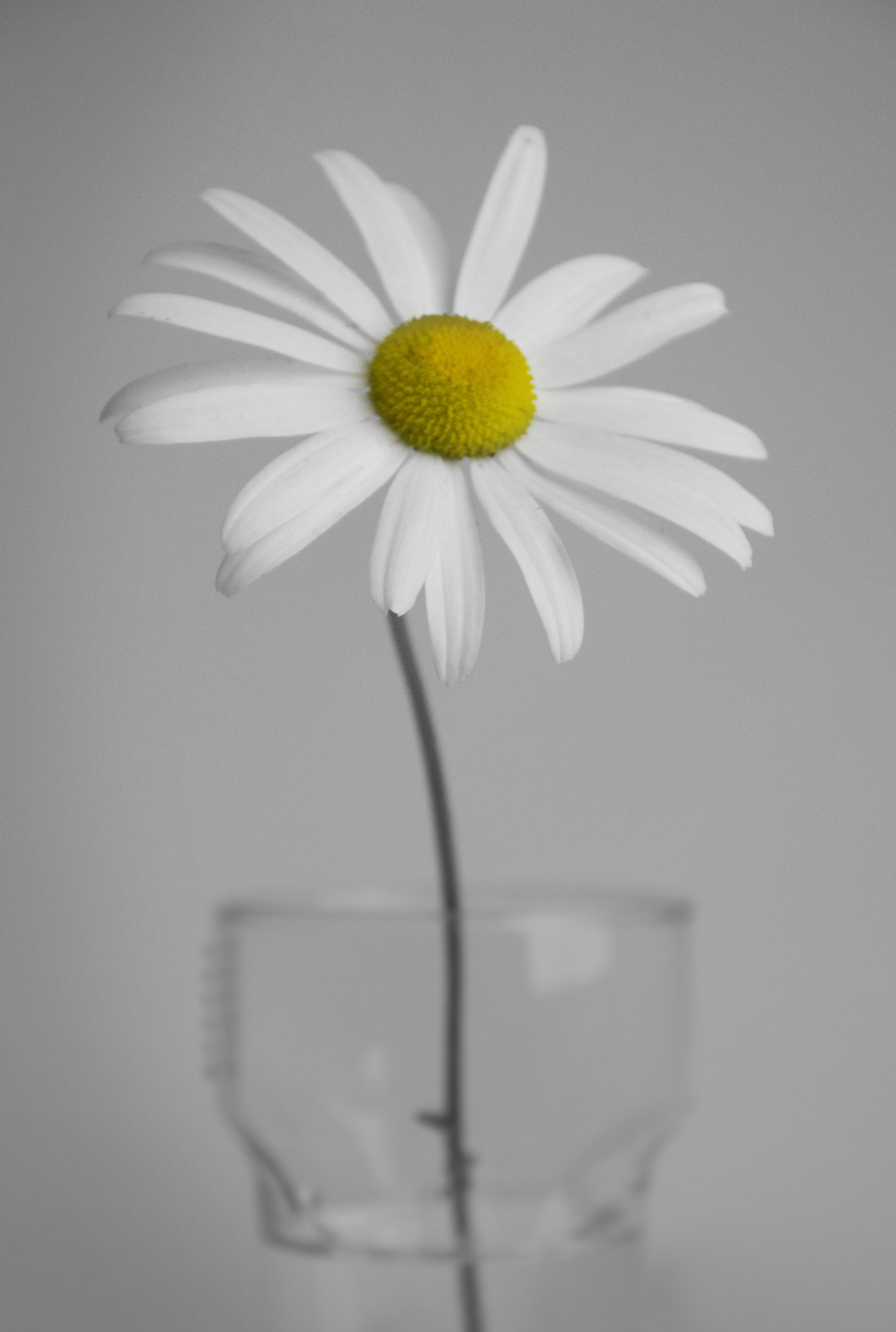 IMG_6830 Simplicity