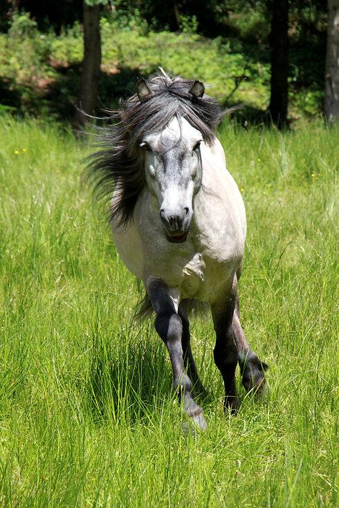 ist ein glückliches Pferd