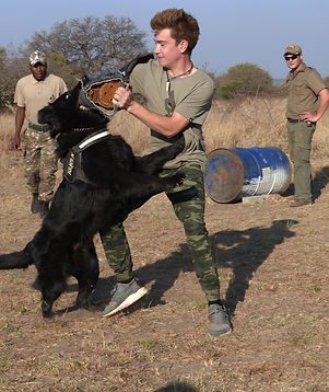 Anti-Poaching Dog Bite Work