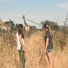 Volunteers Walking Up To A Giraffe