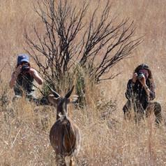 Wildlife Volunteers Getting a Photo of an Nyala