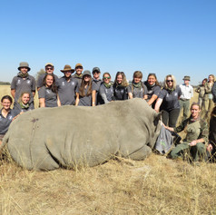 Volunteers Having A Group Photo With A Dehorned Rhino