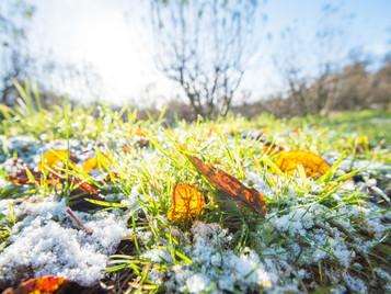 Bain de fraîcheur d'hiver à Châtenay