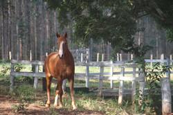 Horse at Gilberto's Farm, 2017