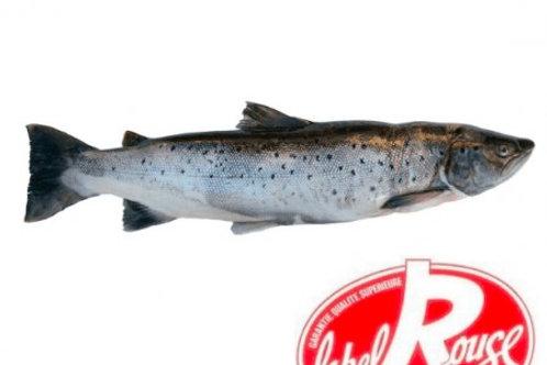 Saumon Écosse Label Rouge 2/3kg