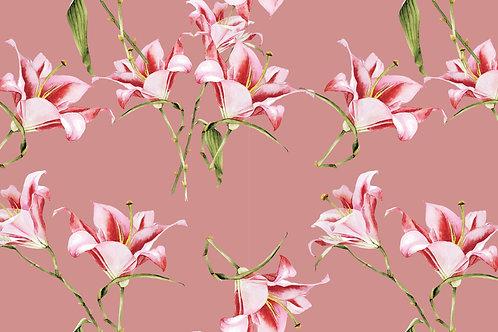 Tulipa Nude 87711