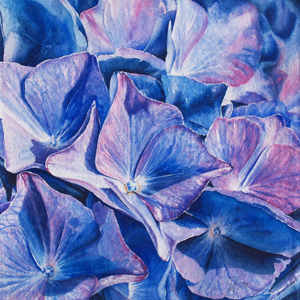 Blauwe hortensia € 350,00