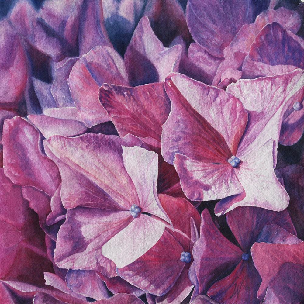 Roze hortensia € 450,00
