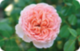 Abraham Darby.png