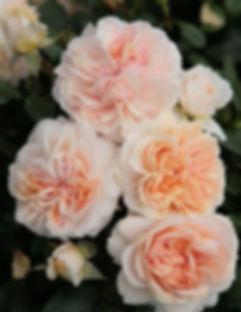 Garden of Roses_edited.jpg