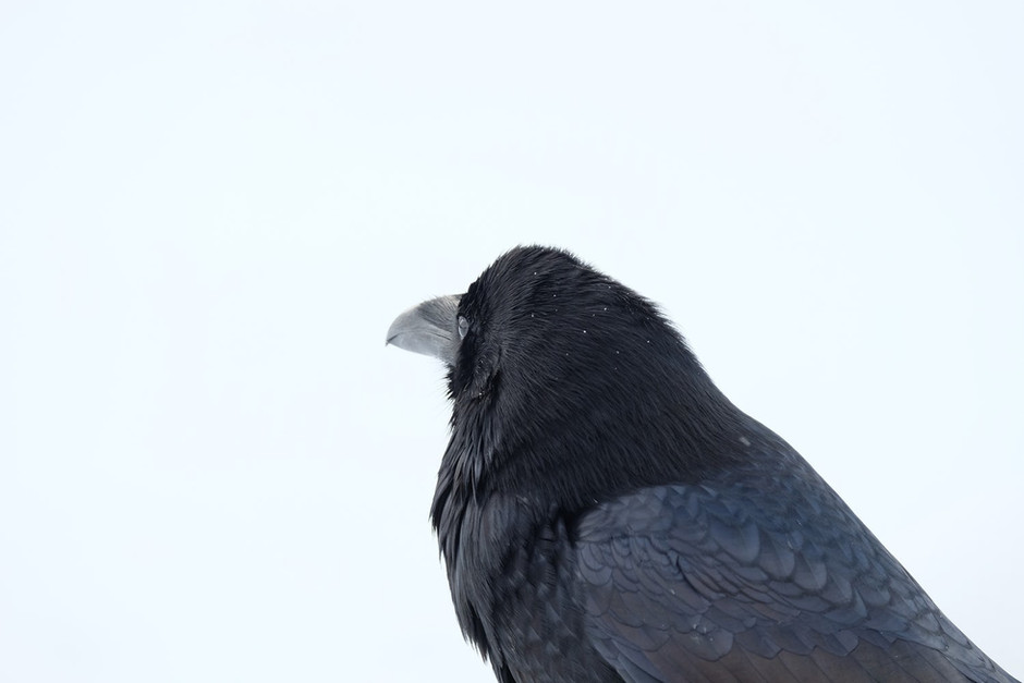 The lure of the Raven - a short story