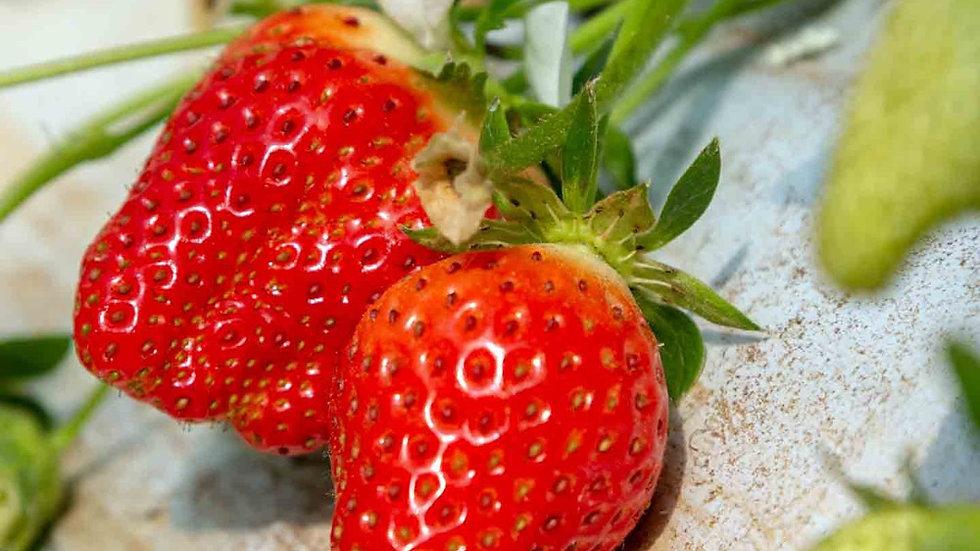 Promo : 1kg de fraises