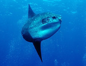 Padi Deep Diver Speciality Scuba Murcia