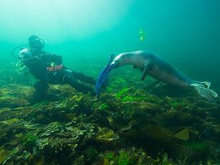 MK Scuba School Seal Diving