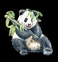Risunki-Panda-15-removebg-preview.png