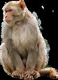monkey-clip-art-11.png