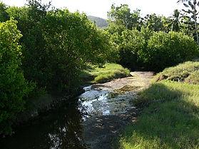 Petersen-Creek6.jpg