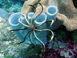 Crinoidand sponge