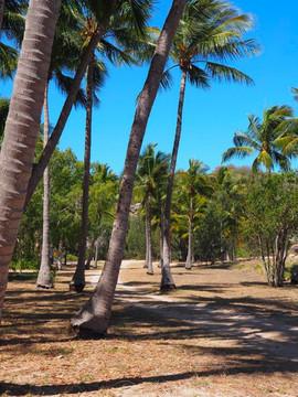 CoconutAvenue.jpg