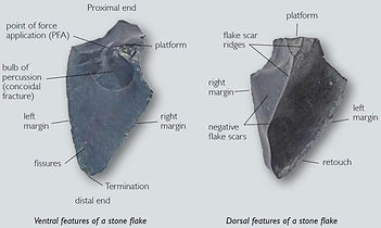 Artefacts ventral and dorsal features.jp