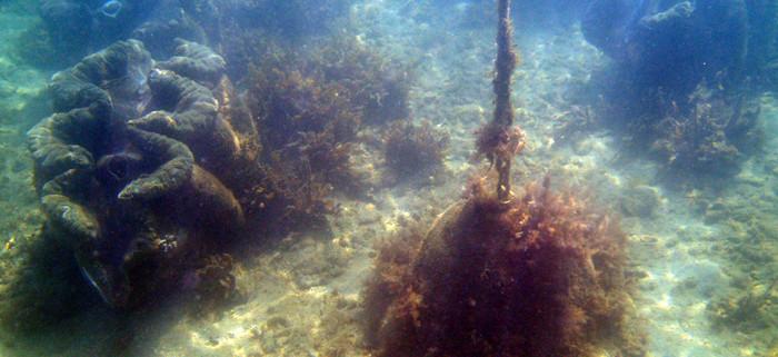Giant Clams in Geoffrey Bay.