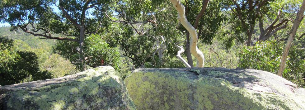 Hinterland boulders.