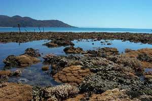 Fringing Reefs Magnetic Island.