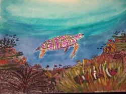 Sea Turtle over reef
