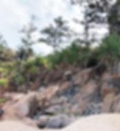 Alma Bay headlands Pandanus.jpeg