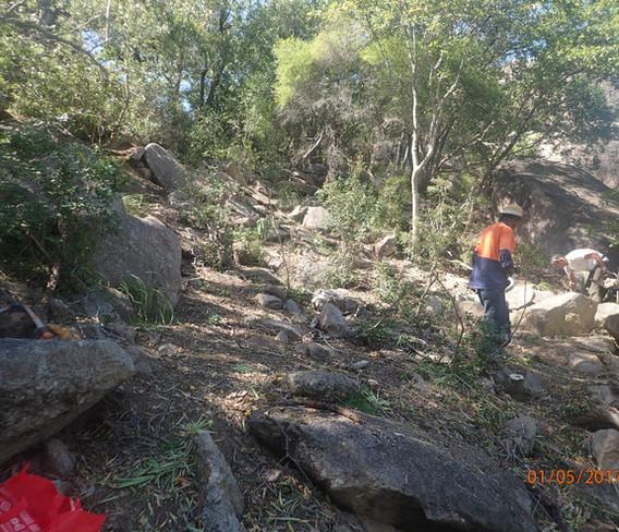 Yellow oleander Bremner Point: (After)