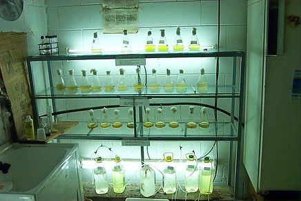 microalgae%20stocks_edited.jpg